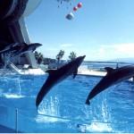 イルカ3頭ジャンプ