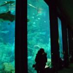 パノラマ大水槽